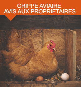 grippe-aviaire